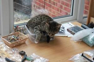 My little cat Pepper sleeping in a bead box.
